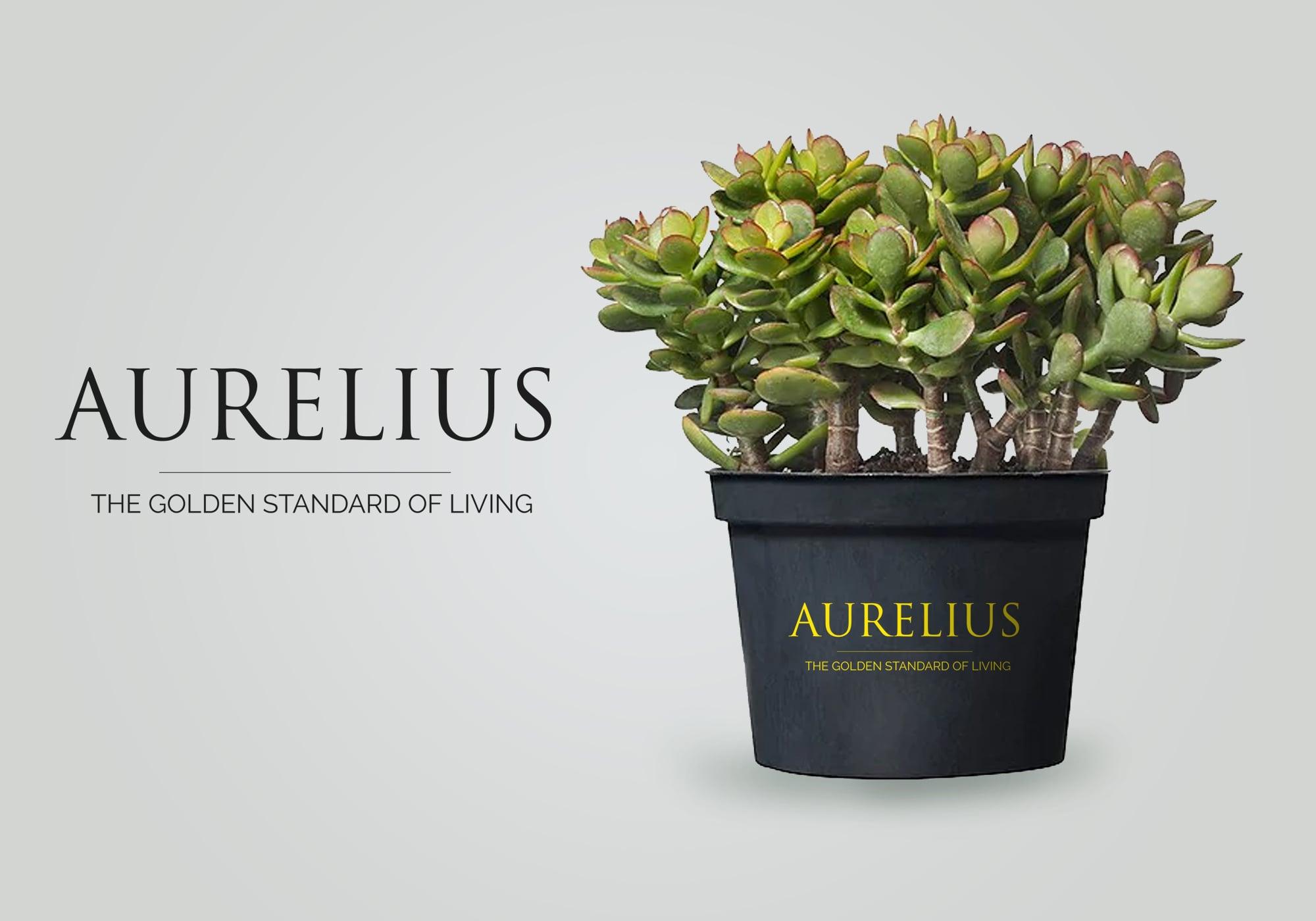 Creative Advertising and Marketing Agency aurelius-real-estate-branding-design-literature-1